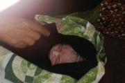 تولد نوزاد در قطار اهواز - تهران