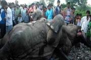 گله فیلها در سریلانکا قطار را از ریل خارج کرد + فیلم