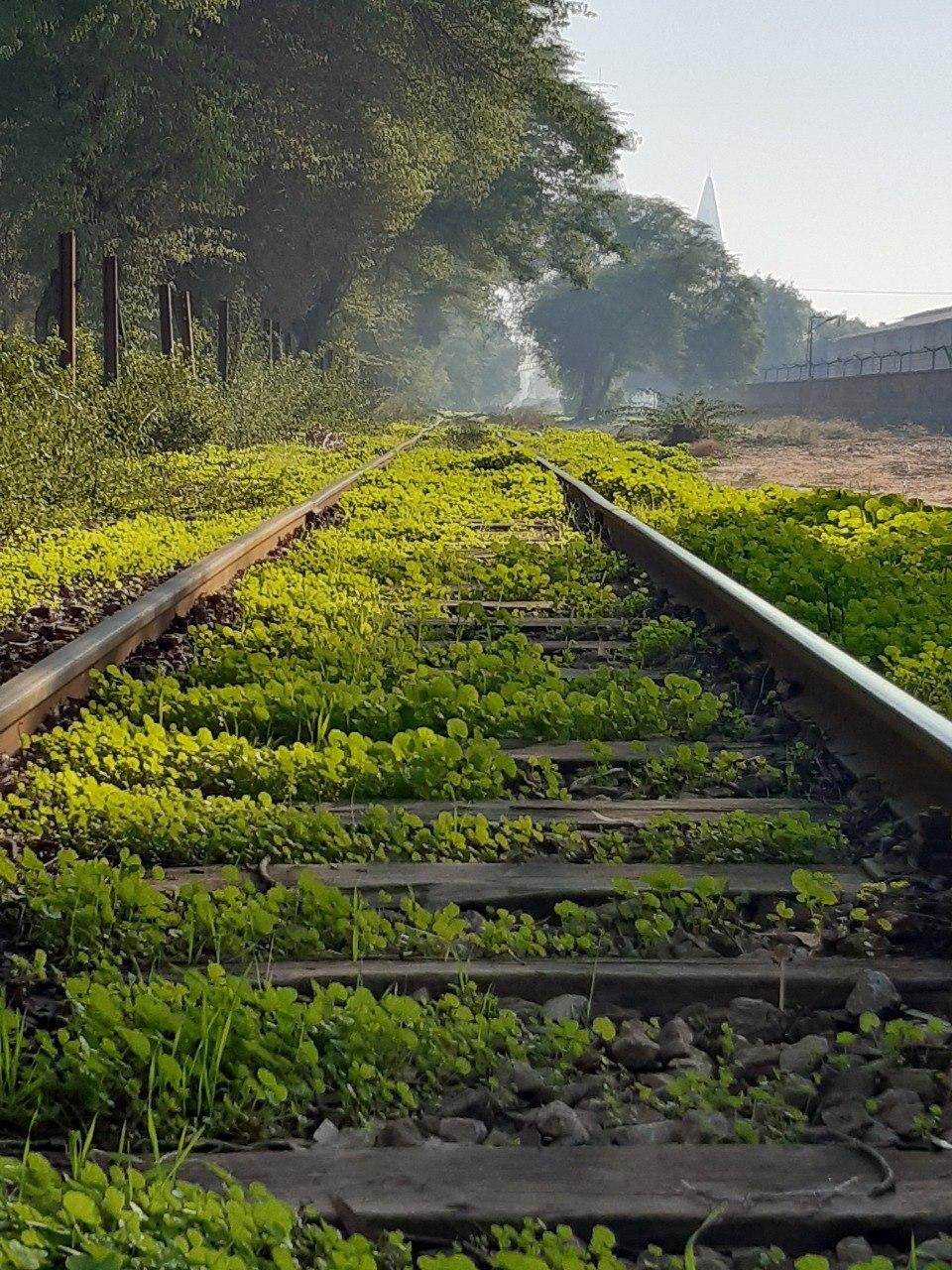 گزارش تصویری بهار در راه آهن جنوب
