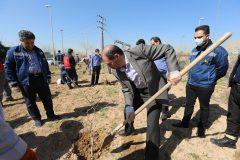 به مناسبت روز درختکاری ۴۰ اصله نهال در پایانه فتح آباد غرس شد