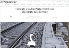 یک قو، حرکت قطارها را در آلمان متوقف کرد